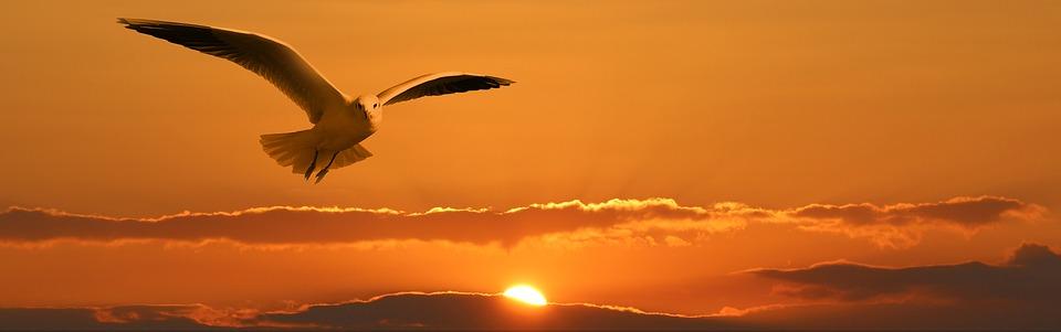 Hay que volar siempre